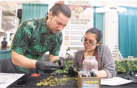 Hawaiii Cannabis Expo vendors